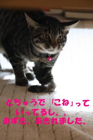 Img_1502_3