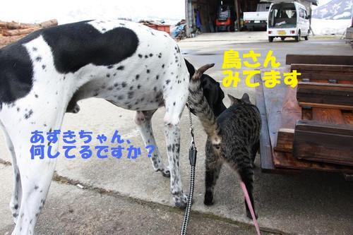 Img_5994