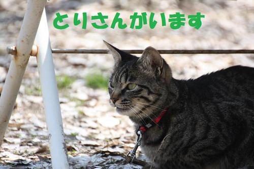Img_7467_2